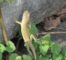 A Giant is After Me-Anole by JeffeeArt4u
