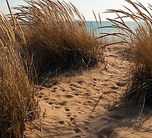 Lake Michigan Dune by alanmedina