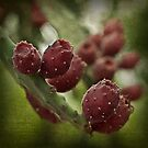 prickly pear by Rosemary Scott