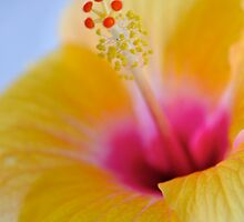 Yellow Hibiscus by Renee Hubbard Fine Art Photography