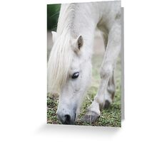 Princess Possum - The Pony Greeting Card