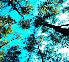 Anawangin Forest by Br0kenAngel