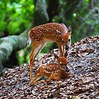White-tailed Deer Fawns Showing Affection by Wayne Hughes