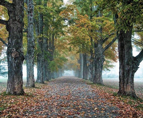"""Maple Lane Farm - Bridgton, Maine"" by T.J. Martin"