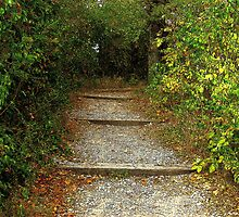 Forest Steps by Thad Peoples