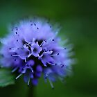 Macro 8343 by jimmylu