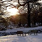 Bradgate Park Snow II by Mike Topley