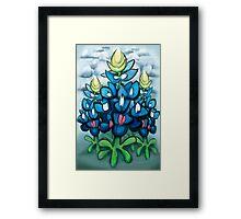 Bluebonnets Framed Print