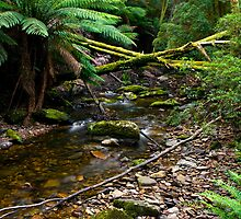 Nelson Creek by Shane Viper