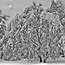 Winter Storm 2010 by Jaime Martorano