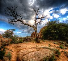 Arrowhead Tree by Bob Larson
