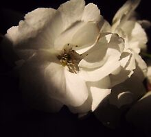 Blossoms in the dark by Cmarcotte