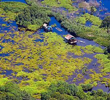 Peatland in Pseudo Colours by RONI PHOTOGRAPHY