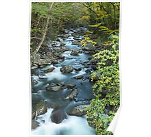 West Prong Little Pigeon River  Poster