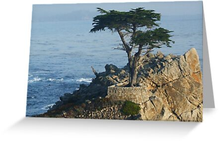 Lone Cypress at Pebble Beach  by Marjorie Wallace