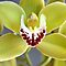 Favorite Orchid by Sarah B. Locke
