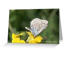 Zephyr Blue,  plebeius pylaon Greeting Card