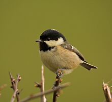Coal tit by Jon Lees