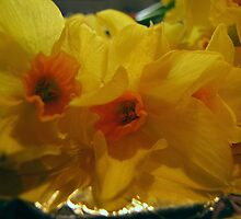 Narcissi by Carol Bleasdale