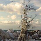 Ice Sculpture - Ashbridges Bay  by Eros Fiacconi (Sooboy)