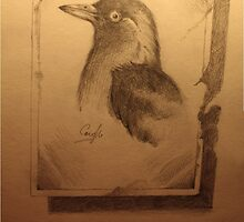 old photo of a bird I once knew by weecoughimages
