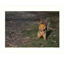 Silly Squirrel Art Print