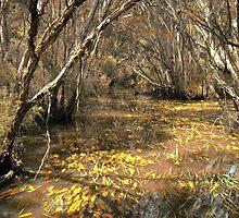 balcombe creek, briars, Mornington by Randle