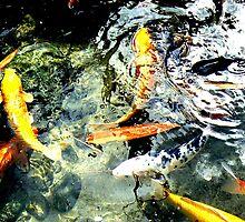 Coy Fish and coins at Taronga Zoo by DStewart1