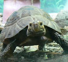 Tortoise power at Taronga Zoo by DStewart1