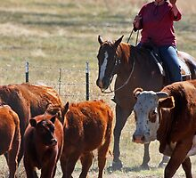 Counting Cattle by Julia Washburn