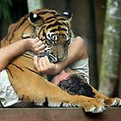 Crickey - Tiger Handler Mauled!!!! by Graham Jones
