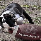 Its Puppy Football Time by Carla Jensen