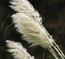 Pampas Grass by Carol Bleasdale