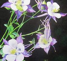 Columbine by lanadi