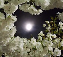 through the blossoms at midnight by Cmarcotte
