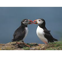 Two puffins Photographic Print