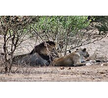 THE LIONS AT THE GIRAFFE KILL Photographic Print