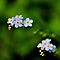 Little Blue Flowers by Michael Schaefer