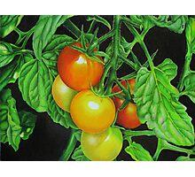 Tomatoes - Garden treat Photographic Print