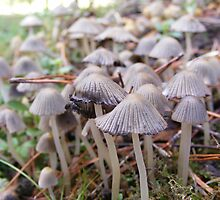 Coprinus species. by Esther's Art and Photography