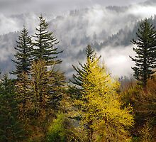 Low Clouds in the Columbia Gorge by Jennifer Hulbert-Hortman