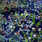 Adirondack Water Lilies by Jaime Martorano