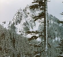 Mountaintop trees by raindancer