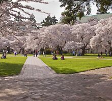 Campus Quad - First Day of Spring by Barb White