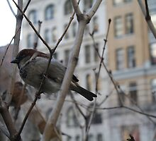 Bird in New York 2 by Ashley Salazar