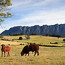 Rural Scenery- West Kentish,Tasmania by Tim Wootton
