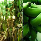 Banana Plantation by Saikat Babin Biswas