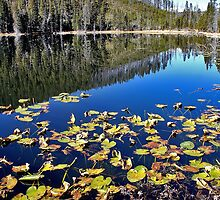 Twin Lakes Yellowstone NP by dgbimages