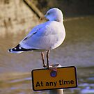 Cornwall: Oi, Can&#x27;t You Read? - It&#x27;s says no waiting at any time. by Rob Parsons