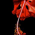 Red  by AnaBanana